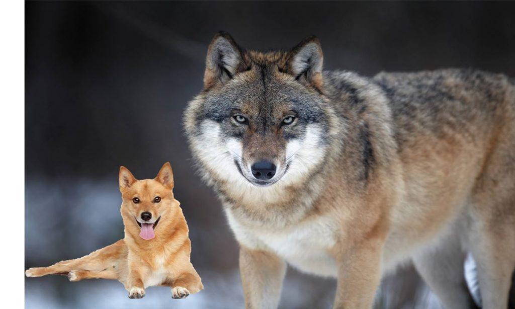 狗與狼-一談就贏